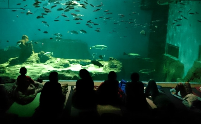 acuario sevilla noche
