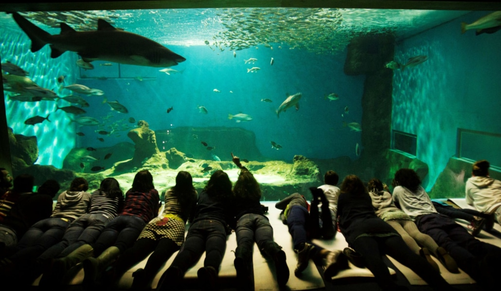 acuario_Sevilla